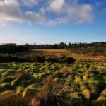 land, farmland, farm for sale
