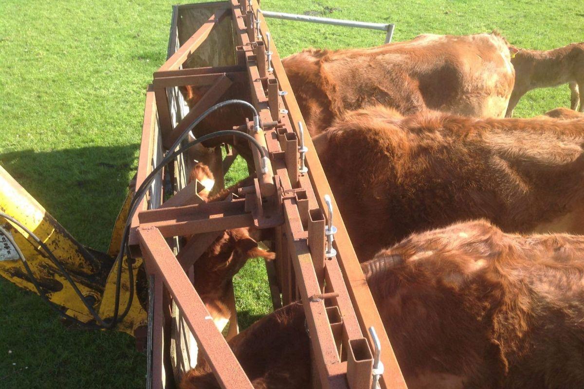 farming news, suckler farming, AI bulls, mobile cattle crush