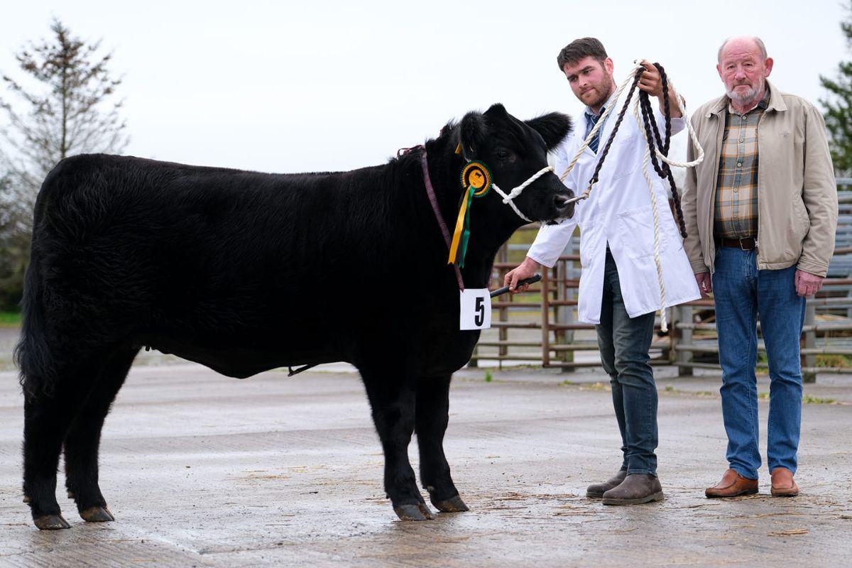 Angus cattle, farming news,