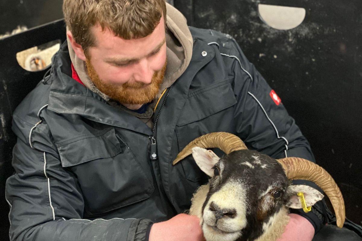 sheep, sheep farming, sheep farmer, young farmers