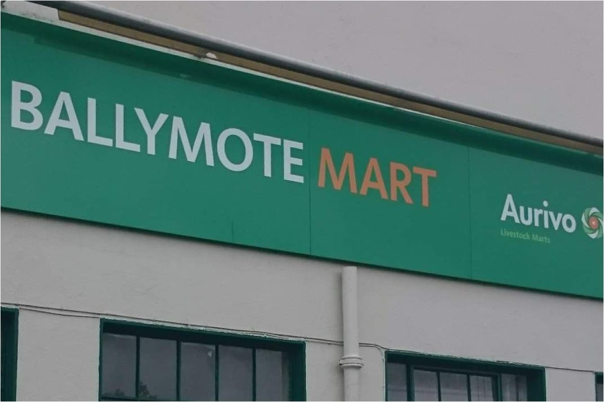Ballymote Mart, David Faughnan, cattle prices, mart prices, mart reports,