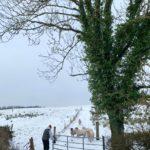 farmhouse renovation project, Glynn family, farming news, sheep farming, beef farming, farming news