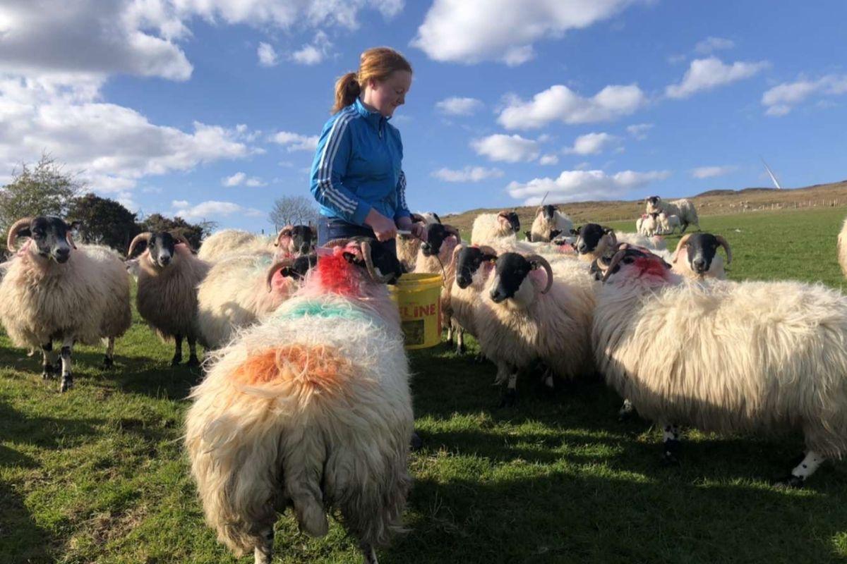 sheep farming, sheep farmer, farm girl, women in agriculture, women in farming,