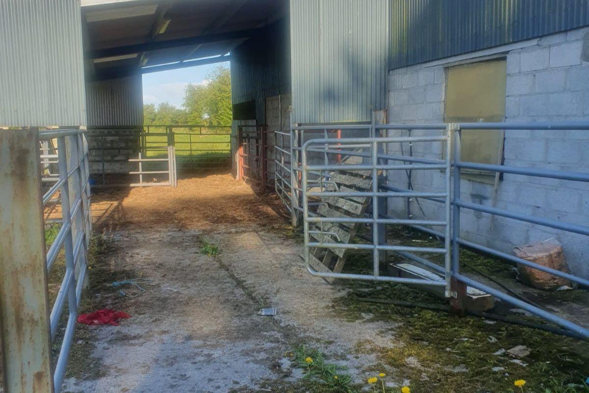Livestock Haulage, livestock haulier, farming news, Roscommon, cattle prices, sheep farming, beef farming
