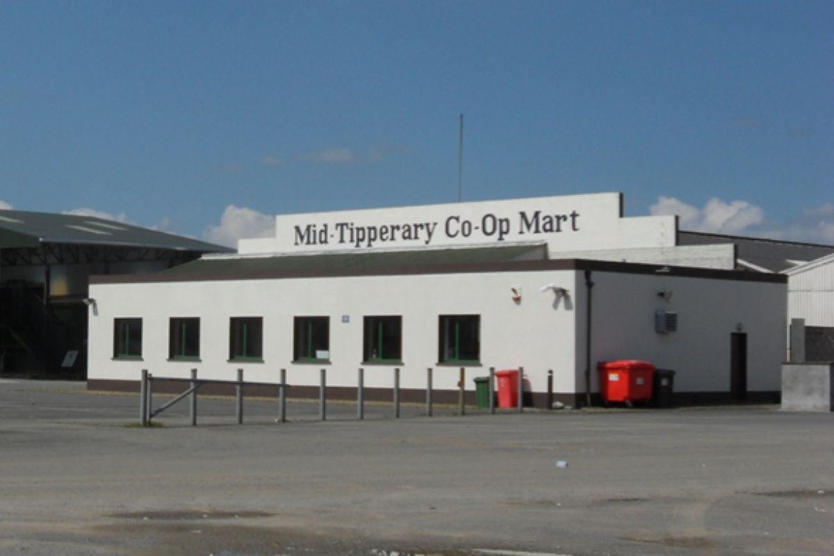 Mid-Tipp Mart, Thurles Mart, cattle prices, mart prices, mart reports