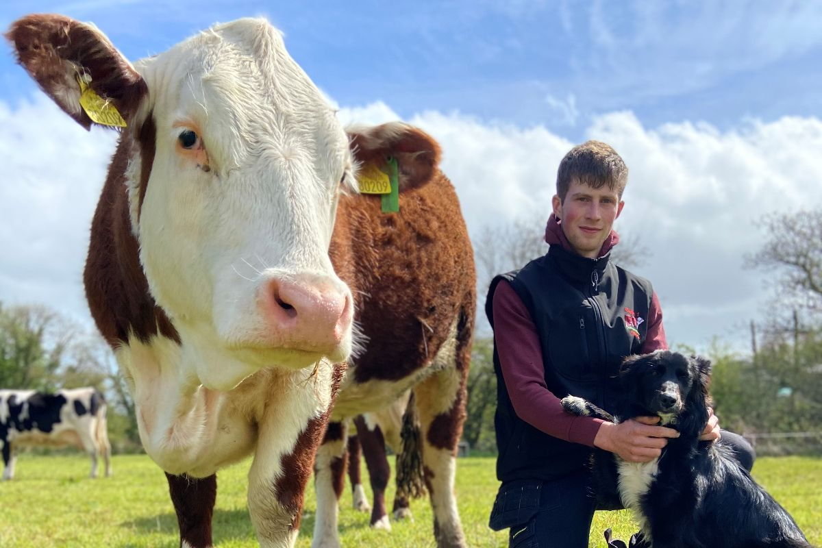 Ringfort 1 pedigree polled Hereford herd, young farmer, beef farming, beef prices, cattle prices, cattle breeders Ireland