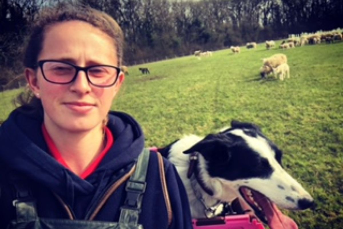 sheepdog, sheep farming,