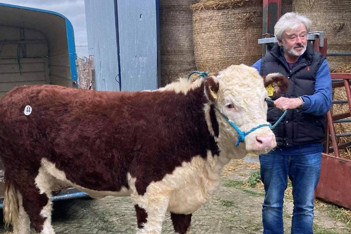 Emma Clancy, Hereford Cattle, farm girls, women in agriculture, vets,