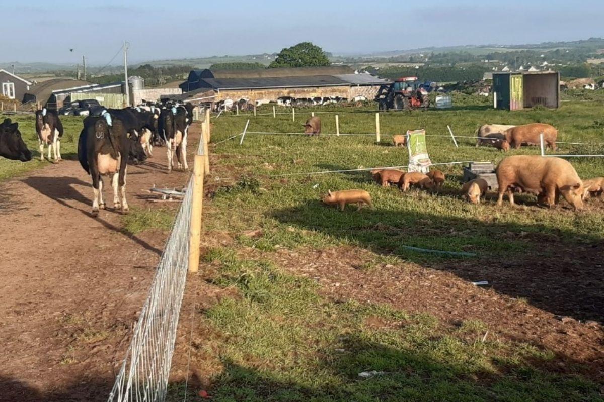 Glenbrook Farm, dairy farming, dairy news, farming news,