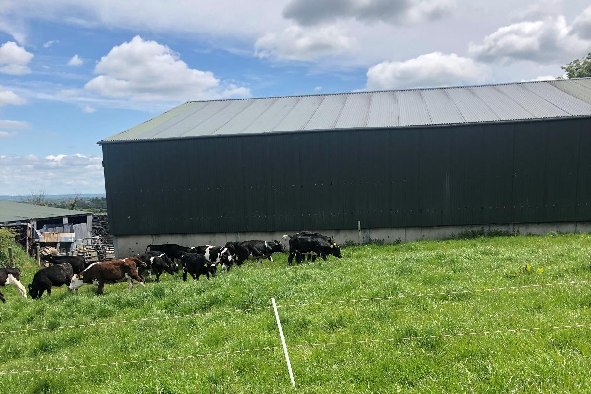 young dairy farmer, dairy farming, dairy farmer, dairy news,