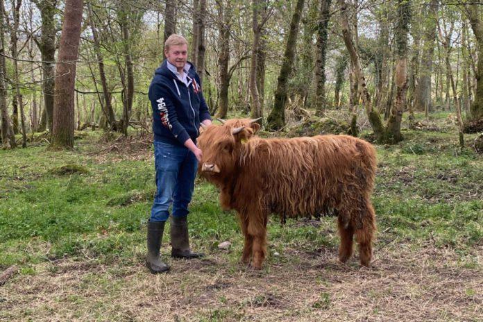 Derg Highlands, Highland cattle, farming news,