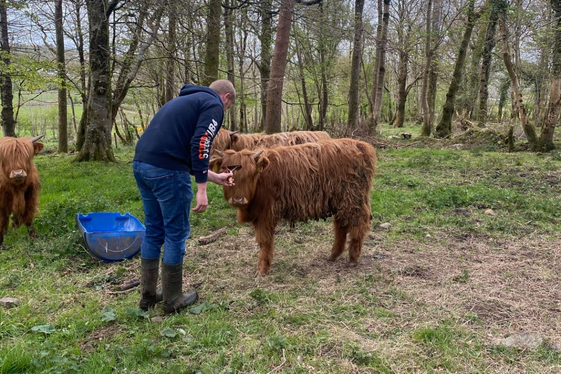 Derg Highlands, Highland cattle, farming news, Northern Ireland