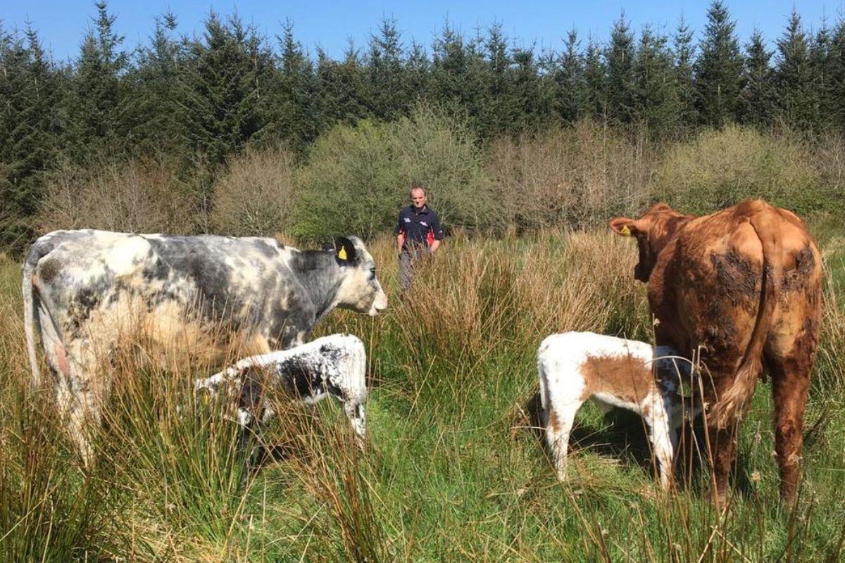 sucklers, farming couple, Northern Ireland