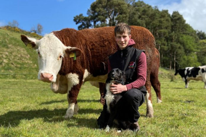Polled Hereford, cattle, farming news, Neil Twomey, Banteer, County Cork