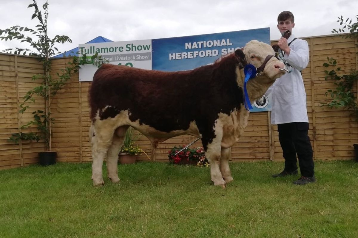Ringfort 1 pedigree polled Hereford herd, young farmer, beef farming, beef prices, cattle prices, cattle breeders Ireland, agri shows,