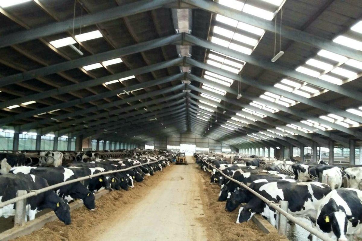dairy farming, dairy farmers, dairy news