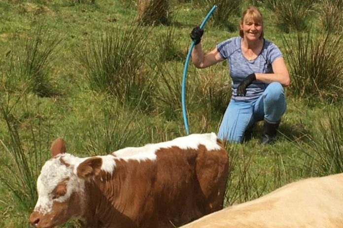 Tullyoran grass-based suckler, farm girls, women in ag, women in farming,