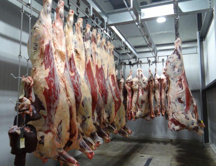 Beef, beef farming, beef news, farming news