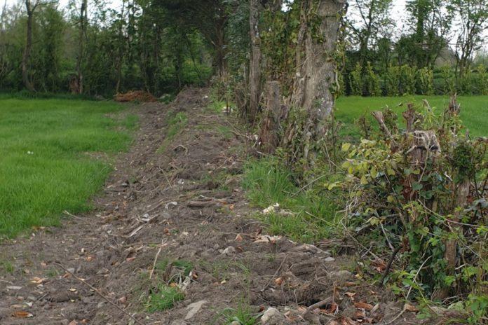 plants stolen from field, farming news, plant stolen, theft