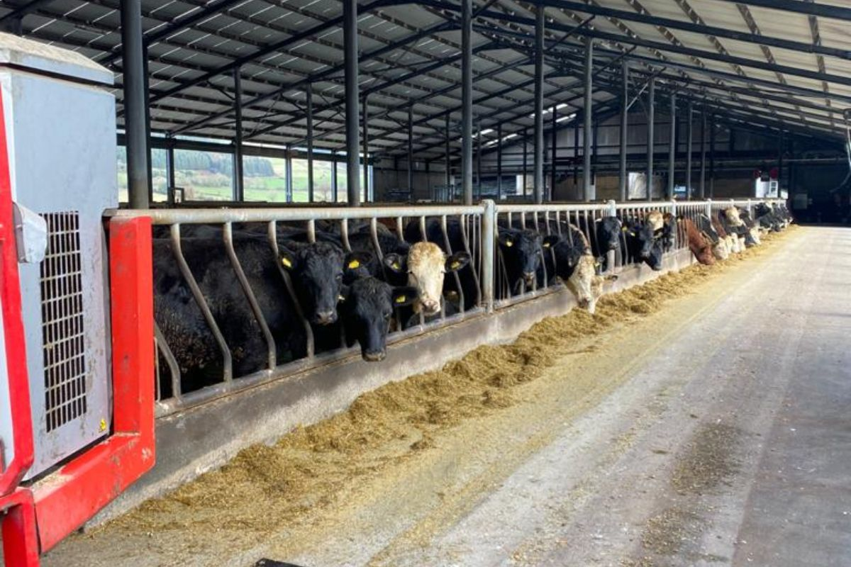 beef farming, beef farmers, beef prices, Glen South Farm
