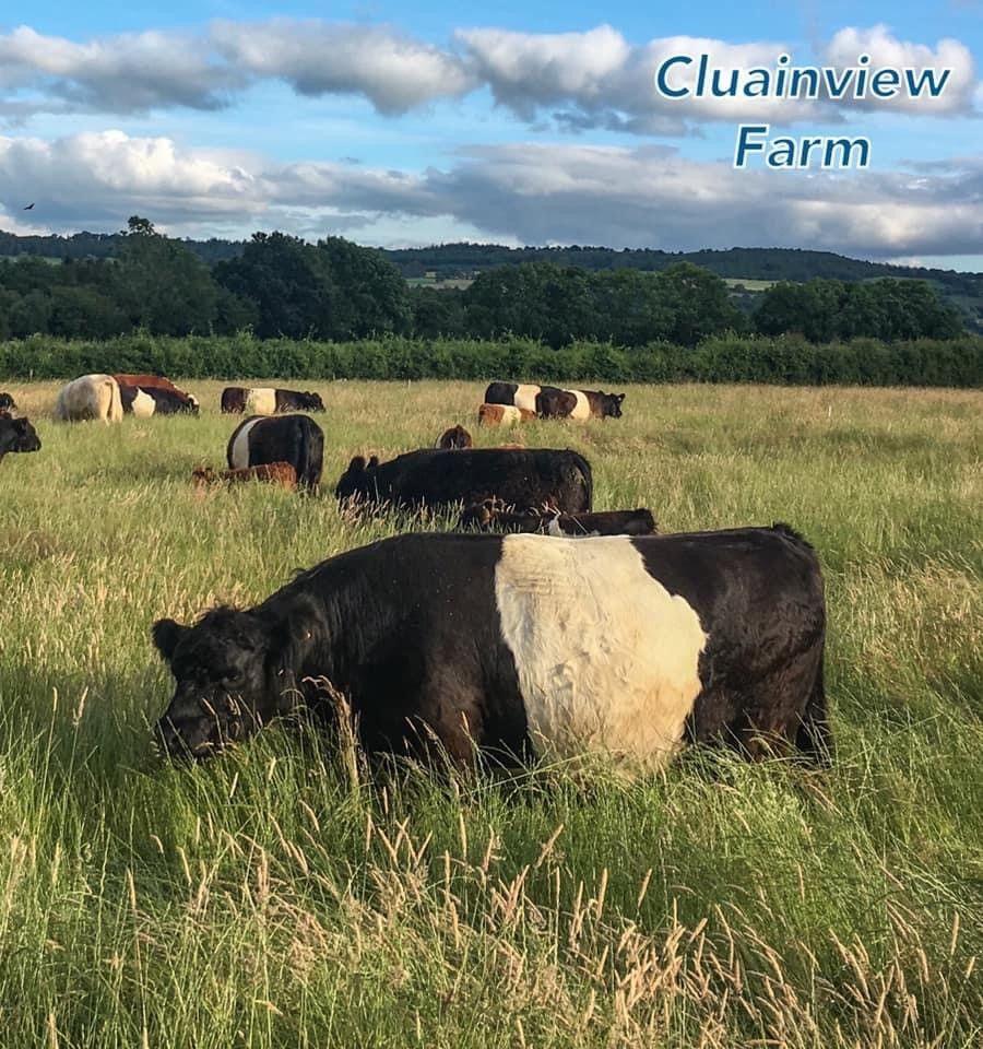 Cluainview Farm, regenerative farming system, Belted Galway, Kilkenny, farming news