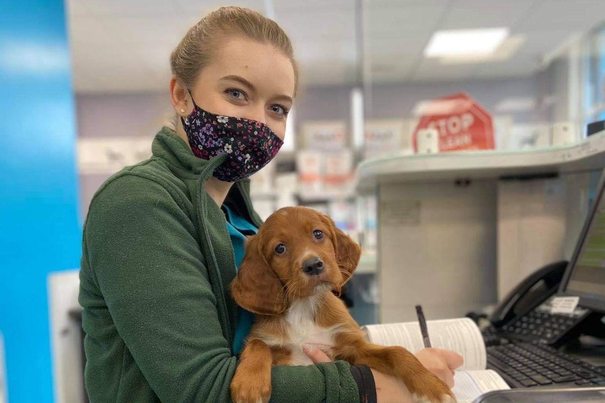 SGGW, veterinary medicine, vet student, studying veterinary,