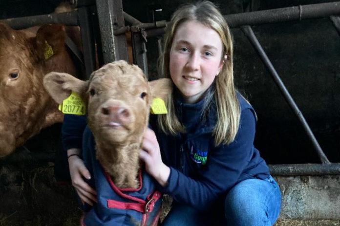 equine science graduate, farm girl, Longford, Kiernan Milling, women in ag, cattle,