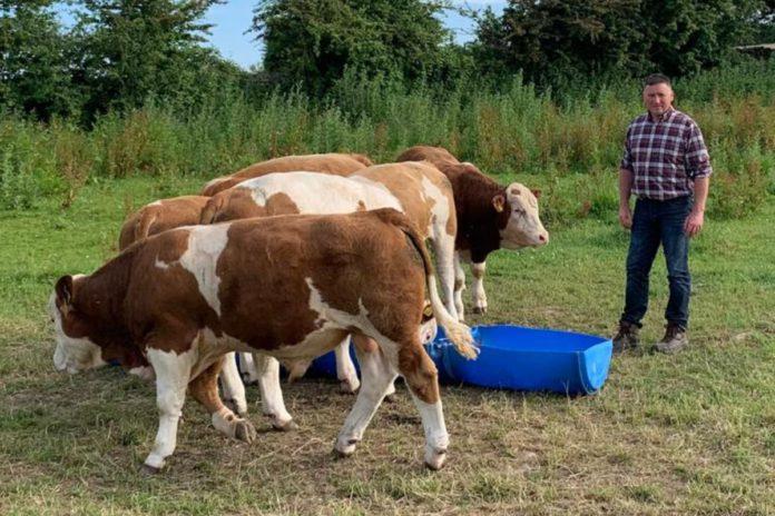 John Hession, Polled Simmentals, Mayo, farming news, suckler farming
