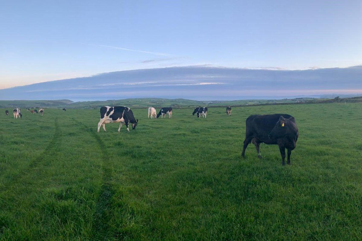 Mícheal Cullinane, dairy farming, dairy farmer, dairy news, Cork,