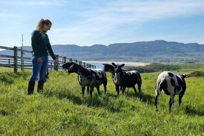 Dutch Spotted sheep, farm girl, women in ag