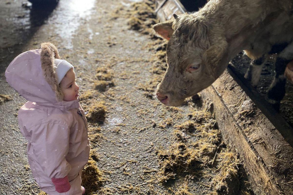 veterinary nursing student, agri careers, veterinary nursing, CAFRE, farm girls, farming news