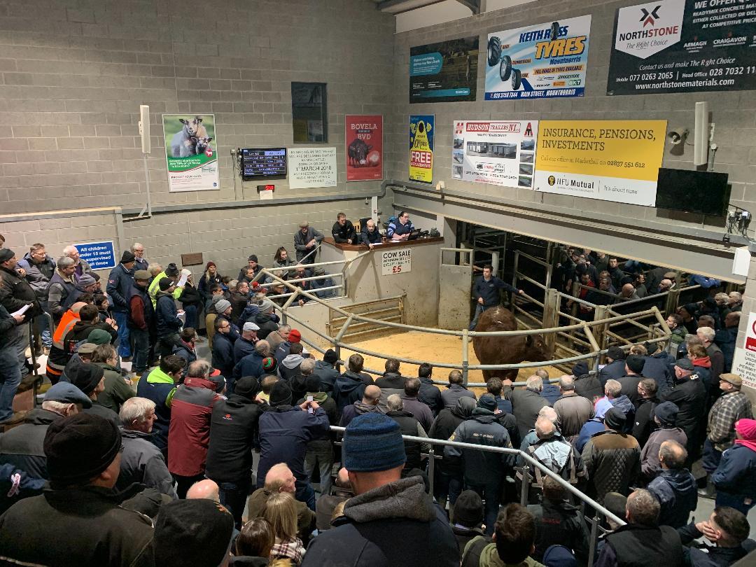 Markethill Livestock & Farm Sales LTD, women in ag, women in farming, farmers