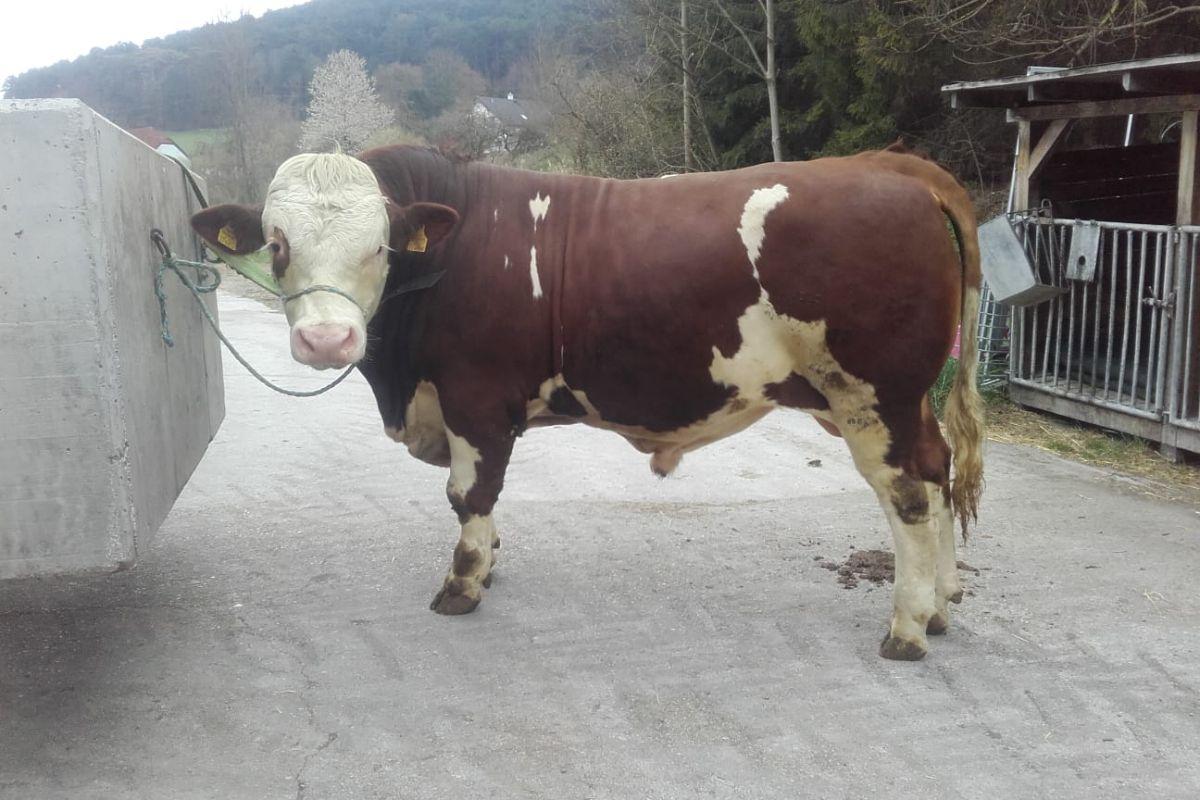 Dairystock Services, dairy farming, dairy news, dairy farmers, Dairystock Services