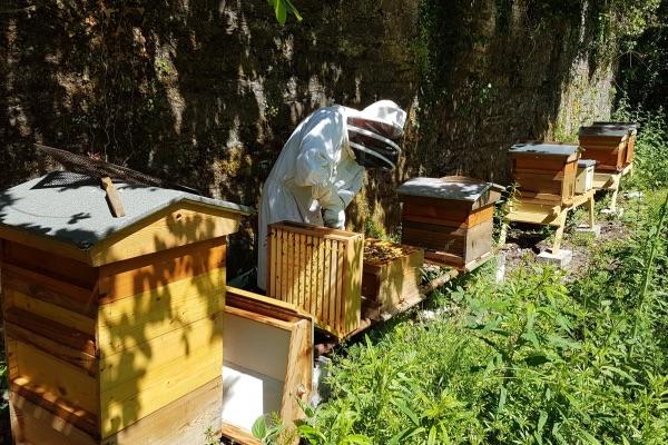 Beehives, beekeeping,