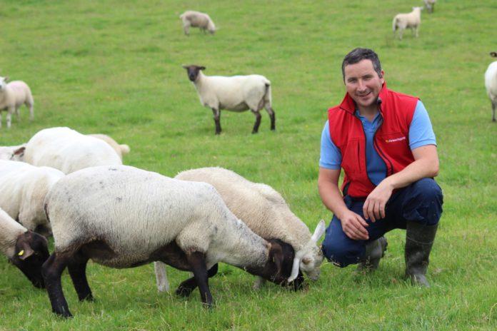 Anima, sheep, sheep farming, sheep farmers