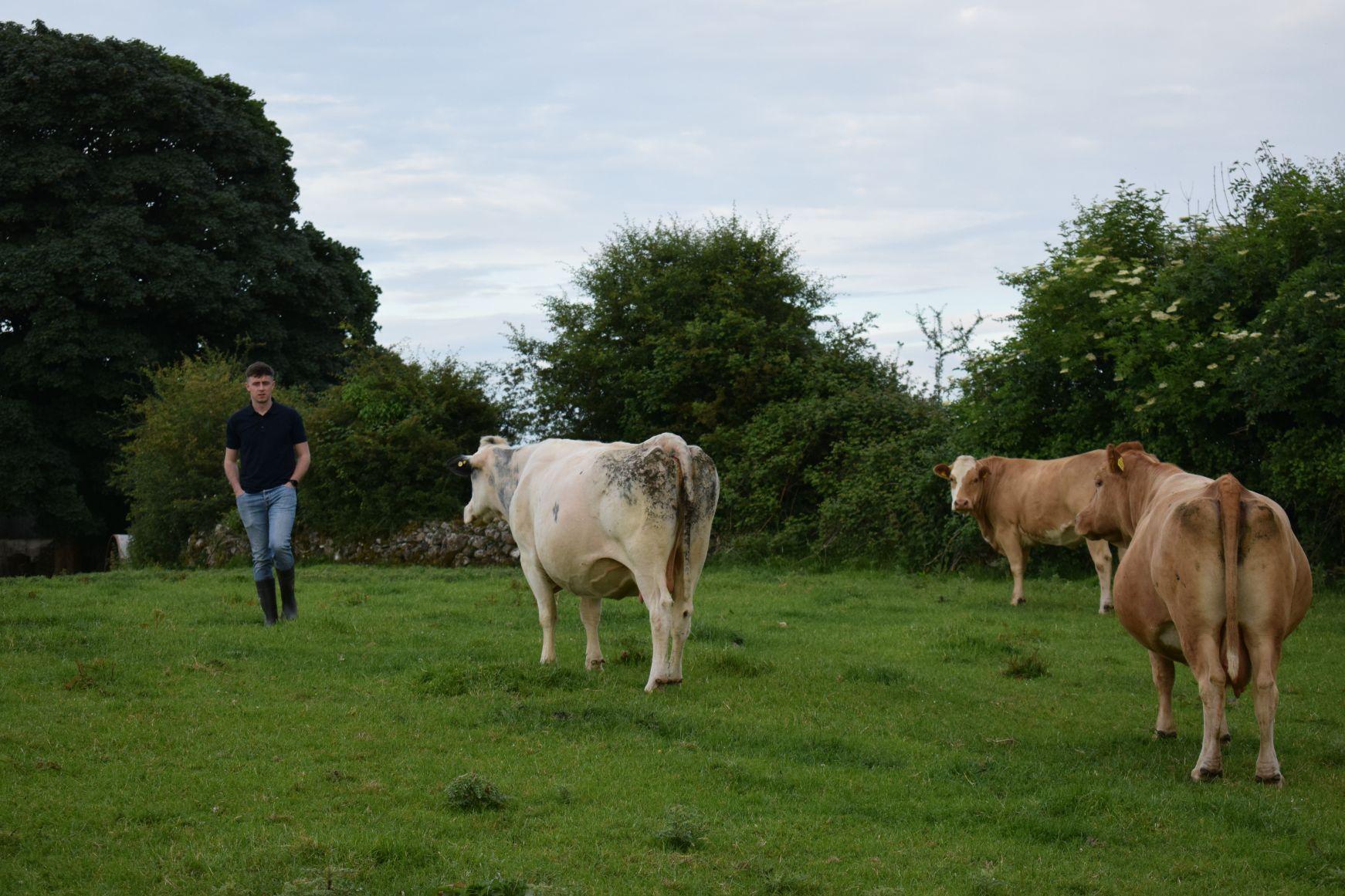 Stephen Fagan, sheep farming, suckler farming, sucklers