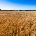 tillage land for sale, farms for sale, farm for sale, property,
