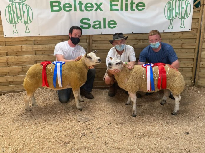 Belgian Beltex Society, sheep prices, sheep farming