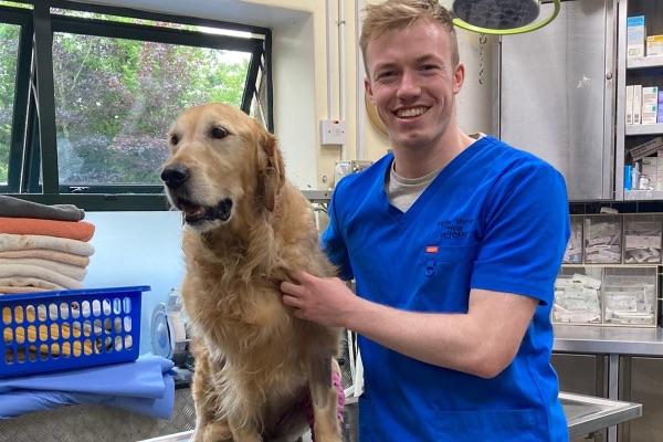 studying veterinary in Budapest, veterinary medicine, farming news,