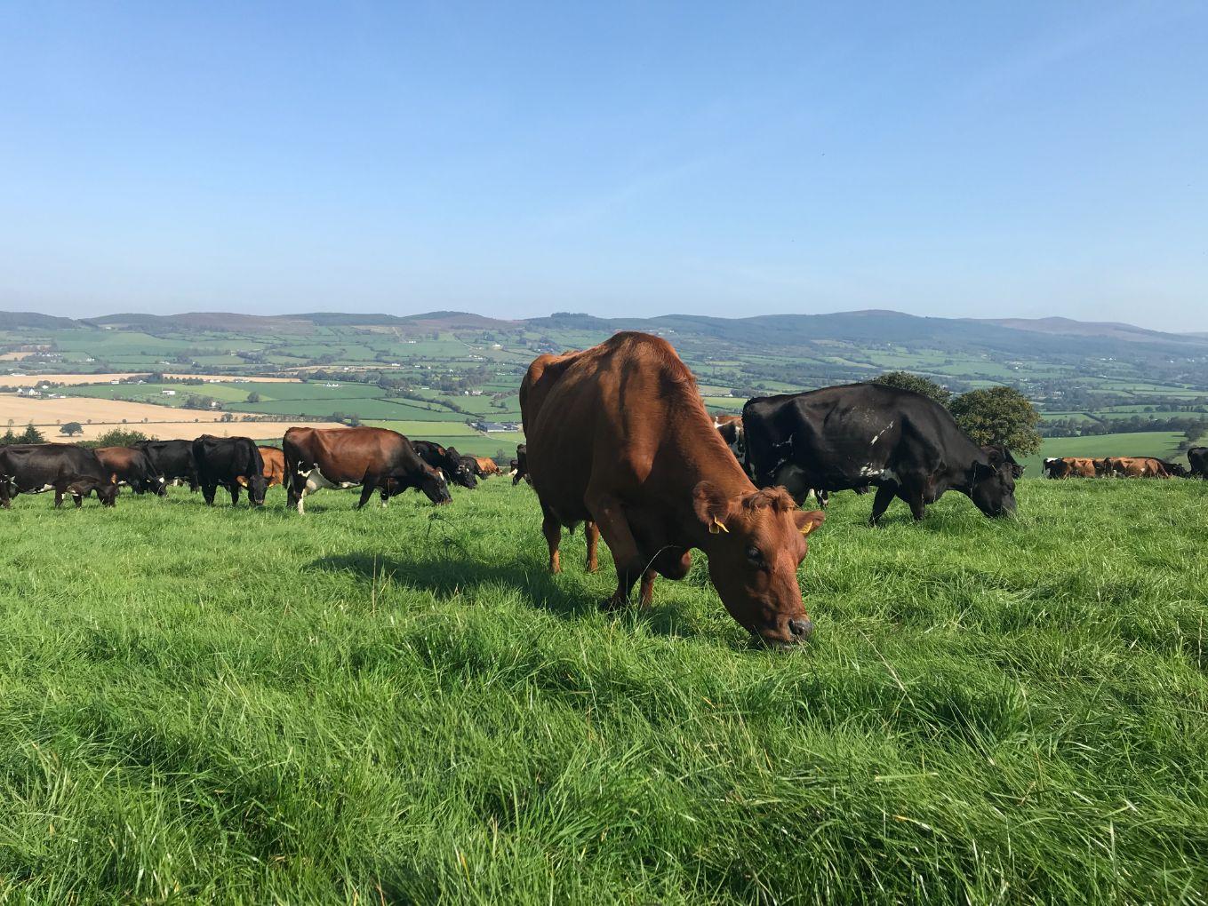 dairy news, dairy farming, dairy farmers, dairy cows, dairy farm