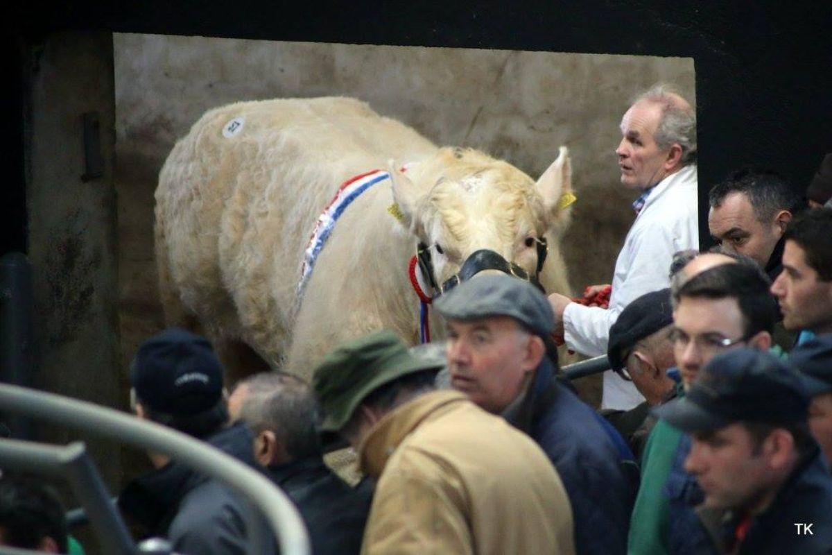 Roughan Charolais, Charolais cattle, farming news, suckler farming, Pat McClean,