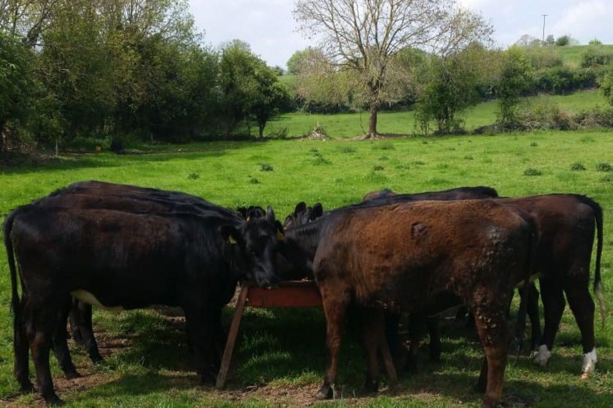 Paul Tobin Butchers, butchering, family farming, farming news