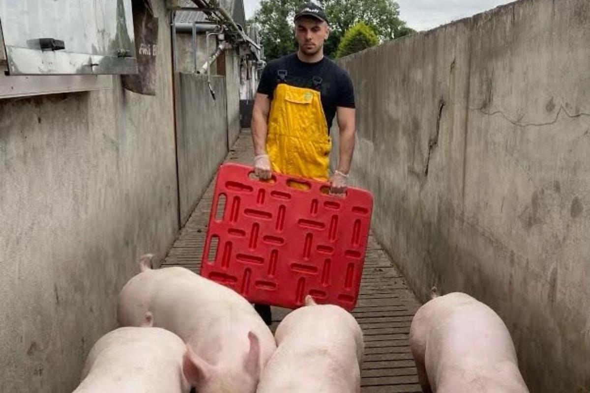 pig farmer, pig farming, pigs, agri careers, Cavan, farming news