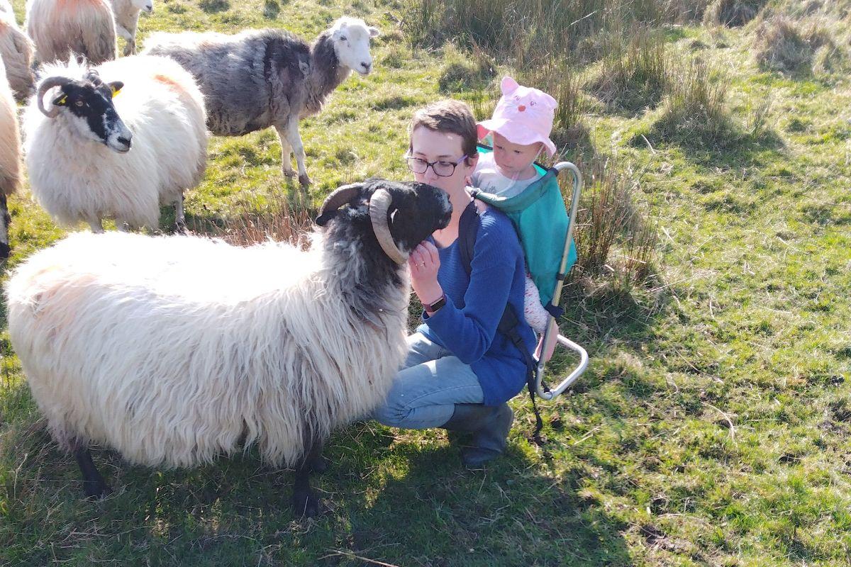 small family farms, sheep farming, sheep farmers, sheep, farming news