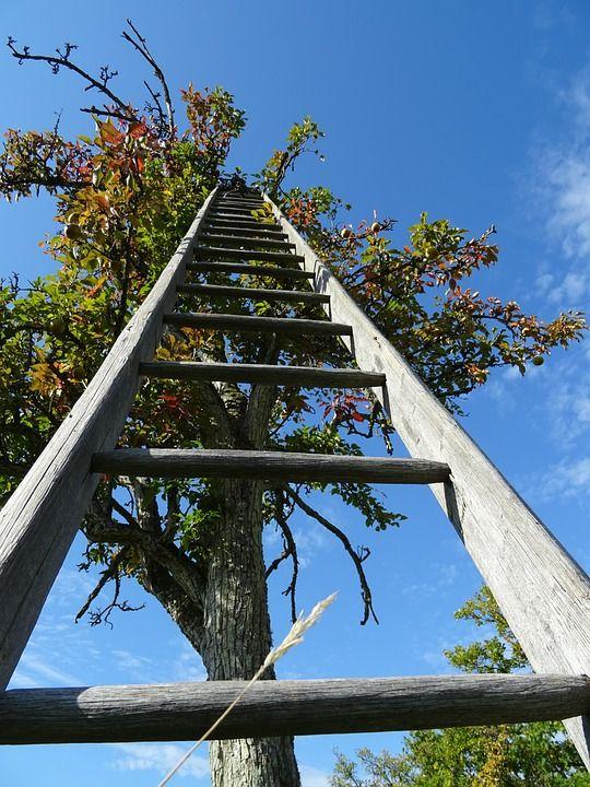 Ladder, farming news