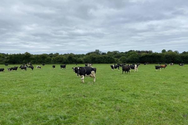 dairy news, dairy farming, dairy farmer, women in ag, Walsh Scholar