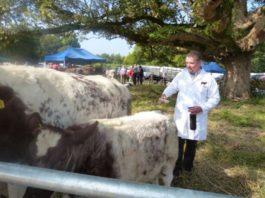 pedigree breeder, Shorthorn cattle, farming news, Angus cattle