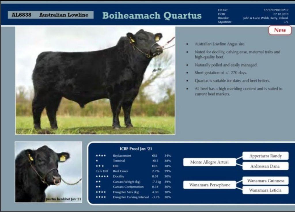 Australian Lowline cattle - Co Kerry Farm