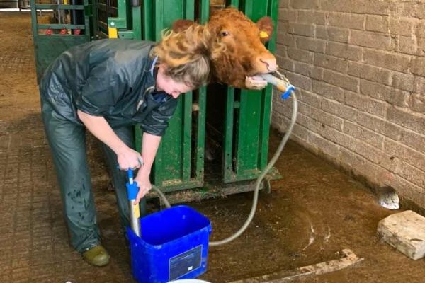 Farm animal vet, farm girls, women in ag, veterinary,