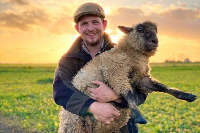 Micklewaite flock, farming news, UK, first-generation farmer with sheep
